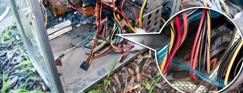 Unusual Computer Problem